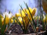 Jar. cibuľoviny v nádobe