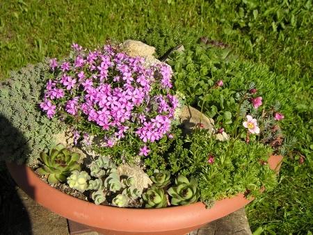 Skalka v kvetináči