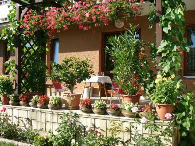 Kvety mám všade na balkone na terase v záhrade doma