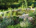 Jazierka v záhrade