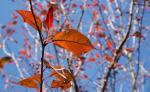 jeseň maľuje lístie