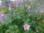 Moja záhrada zmenila farbu tento rok
