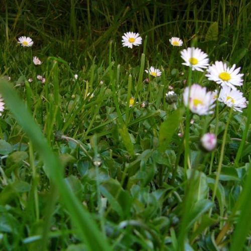 Jar v záhrade, na balkóne alebo terase