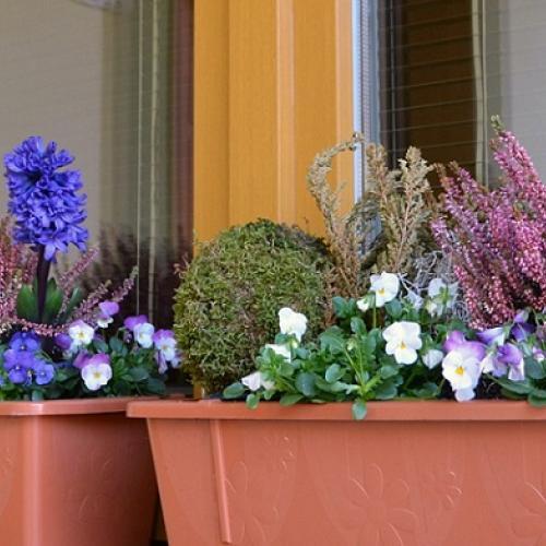 Jarné kvety v črepníkoch