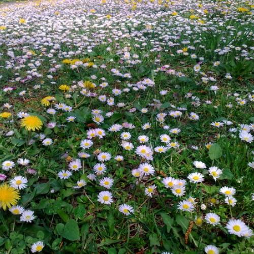 Záplava kvetov