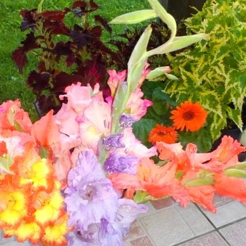 Váza na terase