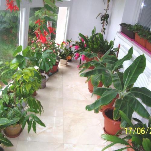 môj balkón