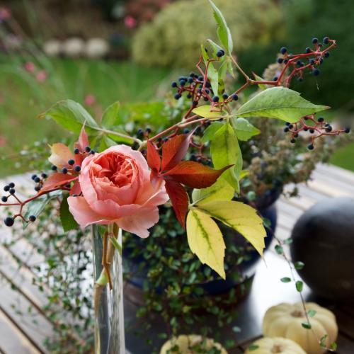 jedny z posledných ruží tento rok