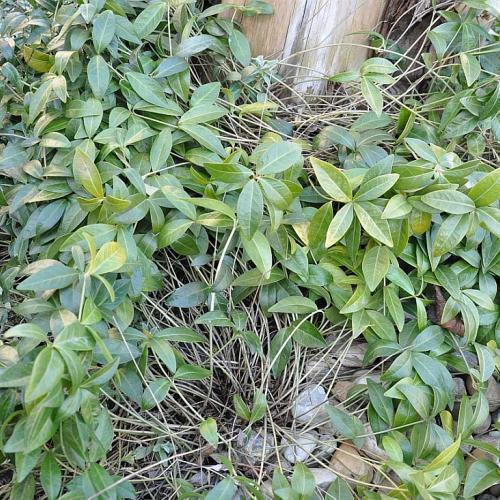 Aká je toto rastlinka?