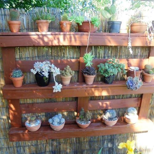 Nový domček pre kaktusy a sukulenty