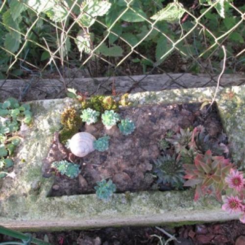 skalné ruže a rozchodníky 2