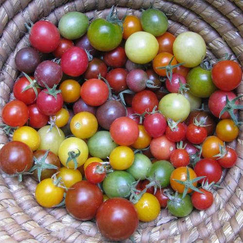 Paleta mojich cherryniek