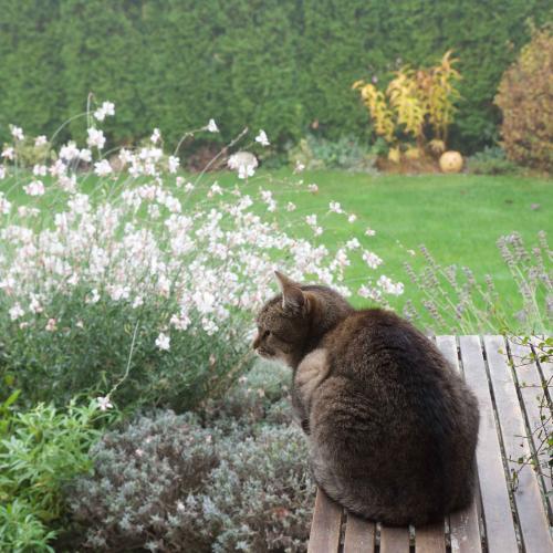 pohľad z terasy do zahmleného rána