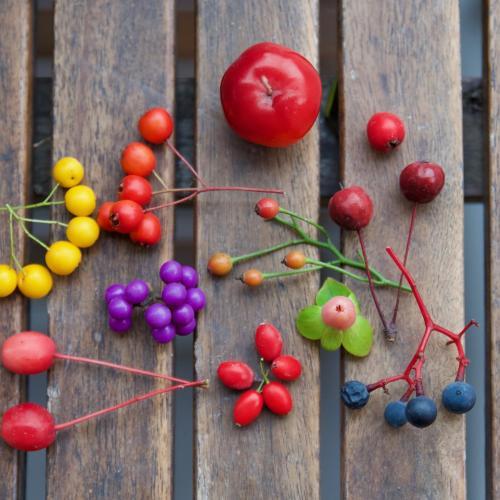 jesenný výber z našej záhrady