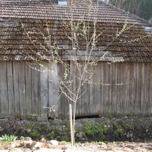 okrasné stromy a kry