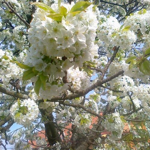 Ked prichádza máj, či ešte apríl?