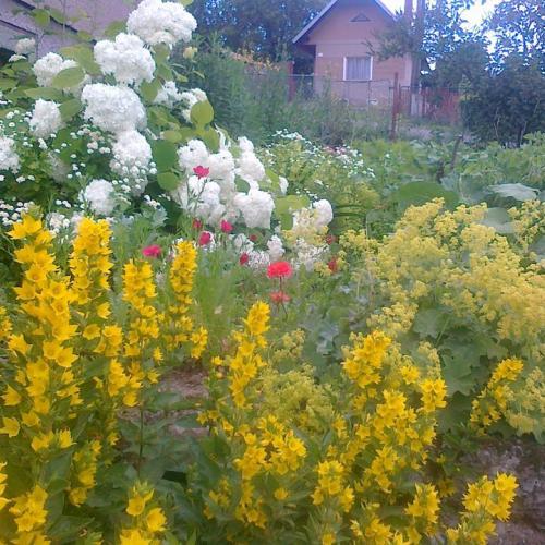 Moja predná záhradka, kvety spolu so zeleninou
