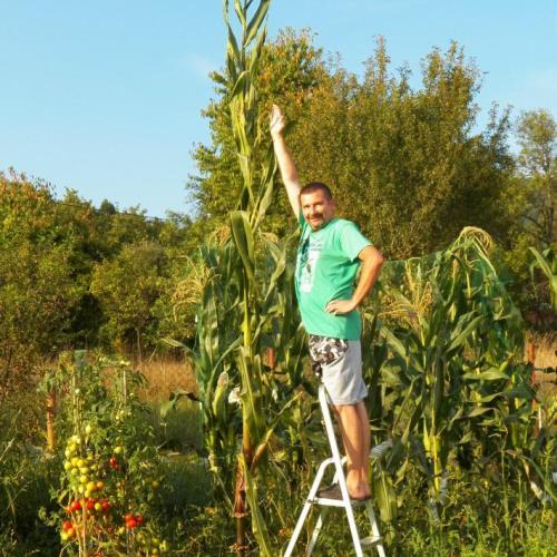 Moja tohtoročná mega kukurica...