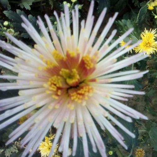 stále  rozkvitnutá záhrada