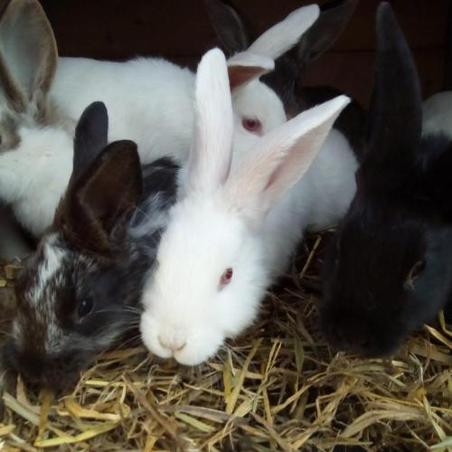 naši zajkovia