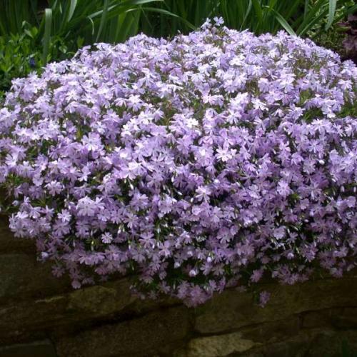 kvitnutie v mojej záhrade