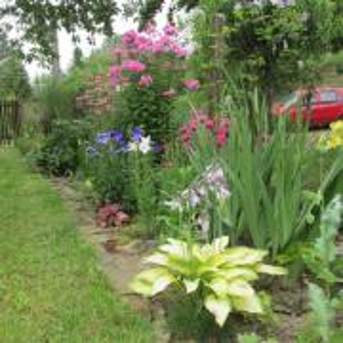 záhradka v daždi