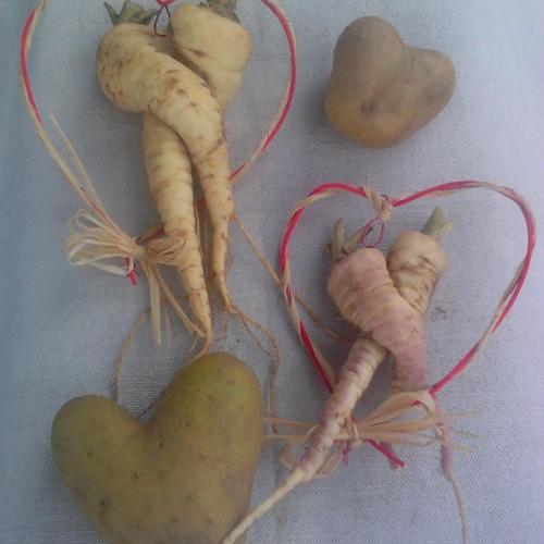 Pestované s láskou