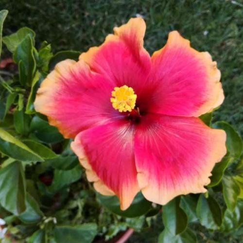 Kvitnú...
