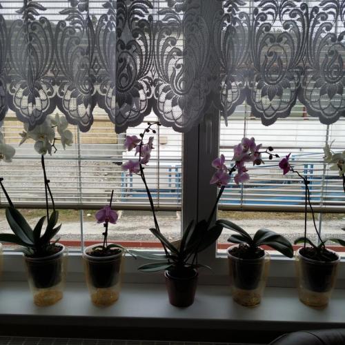 Keď ešte je u nás sneh, tak ešte izbovky nové