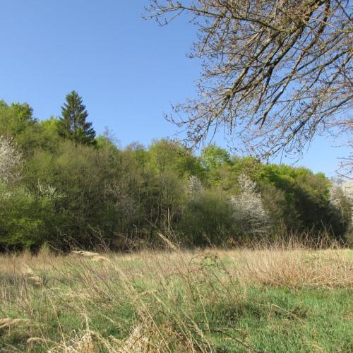 les ožíva
