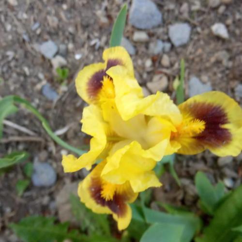 májové kvitnutie v žltom