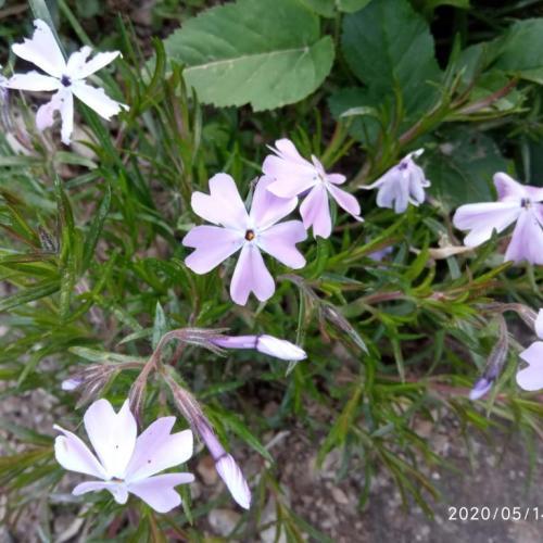nové drobnosti na záhrade