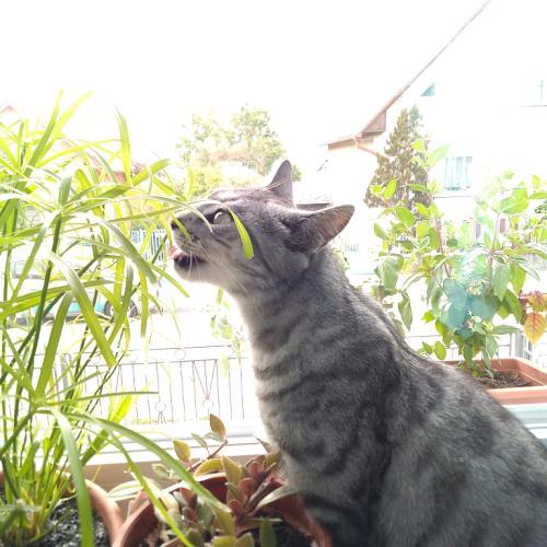 Mačky pestovateľky - pokračovanie