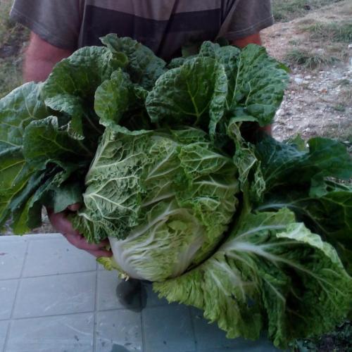 zeleninový obor
