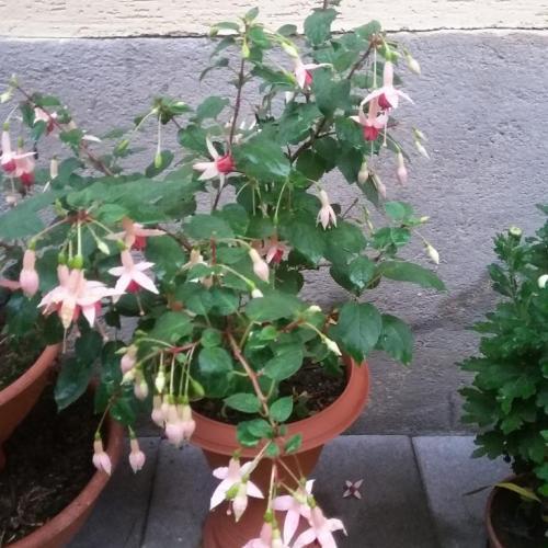 okrasné záhradky