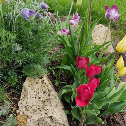 Neskorá jar