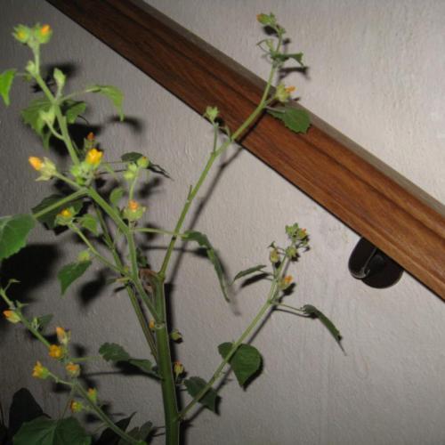 Poznáte túto rastlinu?