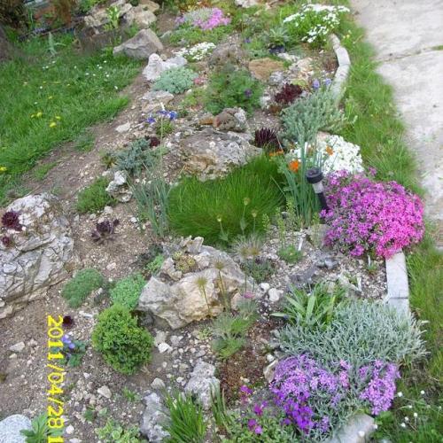 Kaktusy obrázky