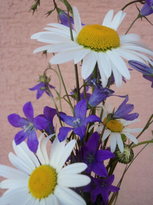 Lúčne kvety z prechádzky