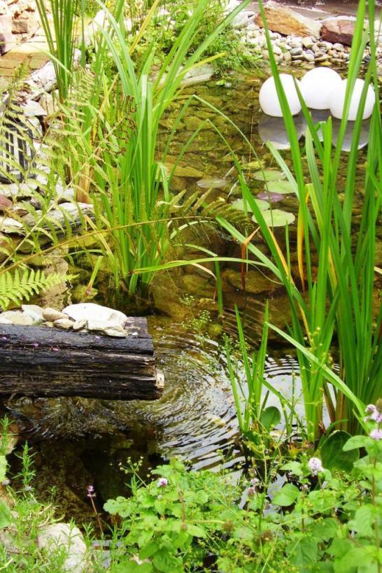 Naše jazierko