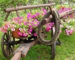 Starinky v záhrade